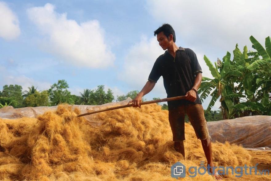Cảnh phơi chỉ dừa - Ảnh: Internet