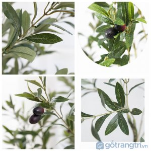Cay-Olive-canh-trang-tri-khong-gian-song-laoi-180cm-GHS-6586-3 (4)