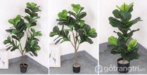 Cay-bang-Sing-trang-tri-phong-khach-loai-120cm-GHS-6583-3 (2)