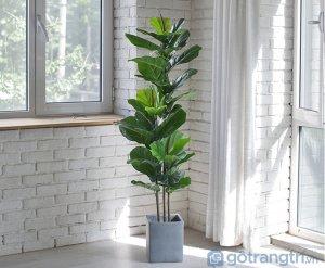 Cay-bang-Sing-trang-tri-phong-khach-loai-120cm-GHS-6583-3 (3)