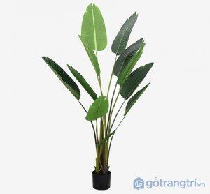 Cay-chuoi-canh-gia-de-trong-nha-loai-120-cm-GHB-6584-2 (1)