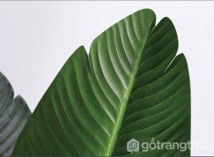 Cay-chuoi-canh-gia-trang-tri-dep-loai-210-cm-GHS-6584-4 (19)