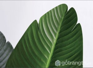 Cay-chuoi-canh-trang-tri-dep-loai-80-cm-GHS-6584-1 (19)