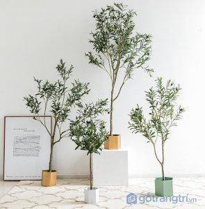 Cay-olive-gia-trang-tri-trong-nha-loai-150cm-GHS-6586-2 (2)