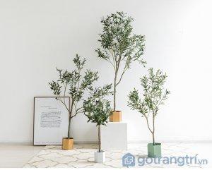 Cay-olive-gia-trang-tri-trong-nha-loai-150cm-GHS-6586-2 (5)