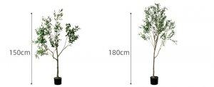 Cay-olive-gia-trang-tri-trong-nha-loai-150cm-GHS-6586-2 (8)