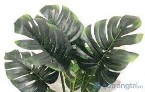 Cay-trau-ba-gia-de-trong-nha-loai-80cm-GHS-6585-1 (7)