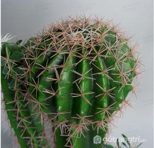 Cay-xuong-rong-tron-de-ban-trang-tri-loai-28cm-GHS-6595-1 (11)
