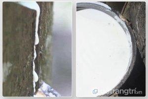 Nem-cao-su-than-hoat-tinh-La-Dome-Grey-15cm (5)