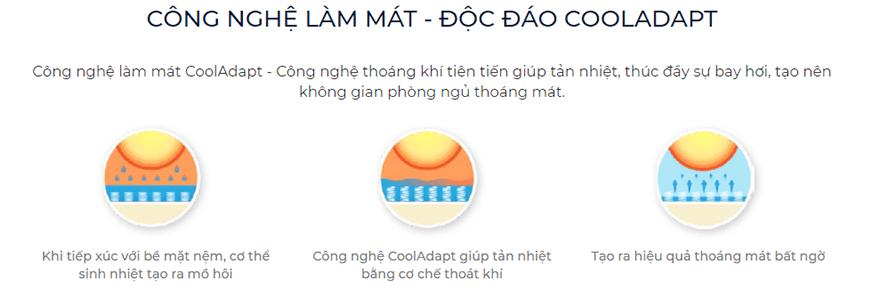 Nem-lo-xo-Lien-A-Cocoon-2.0-Firm